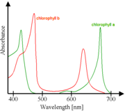 Absorbance spectra of free chlorophyll a (green) and b (red) in a solvent. The spectra of chlorophyll molecules are slightly modified in vivo depending on specific pigment-protein interactions.