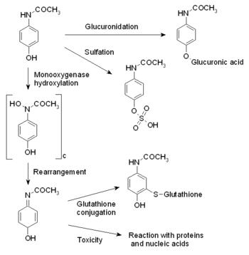 acetaminophen metabolism